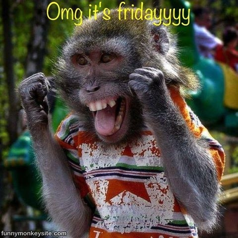 monkey friday